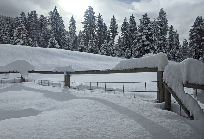 snow on fence and trees