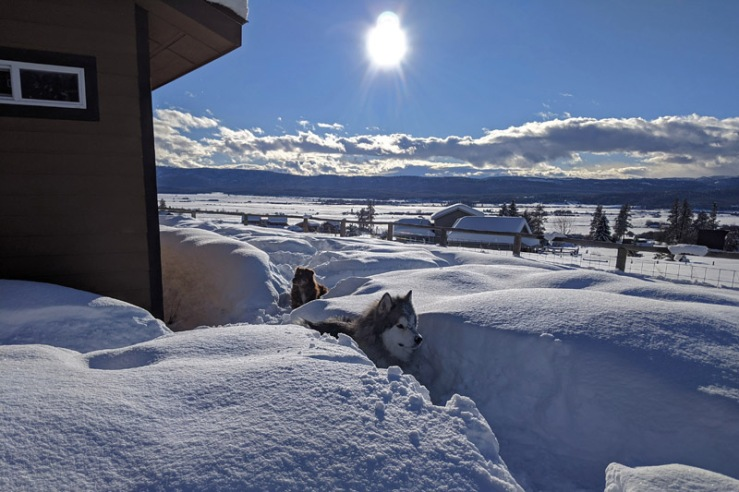dogs in snow paths, sun
