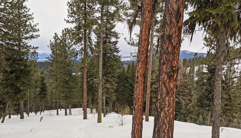view through trees, snow