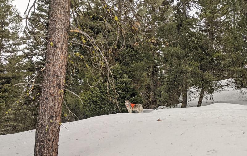 trees, dog on snow