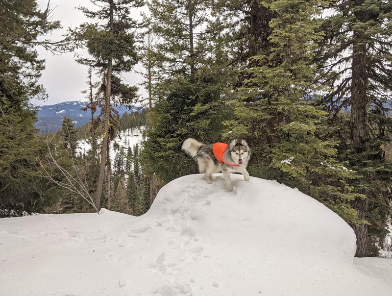 dog running off snow-covered boulder
