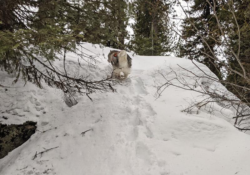 dog running up snow-covered boulder