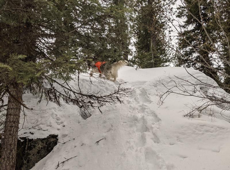 tree, snow, dog running up boulder