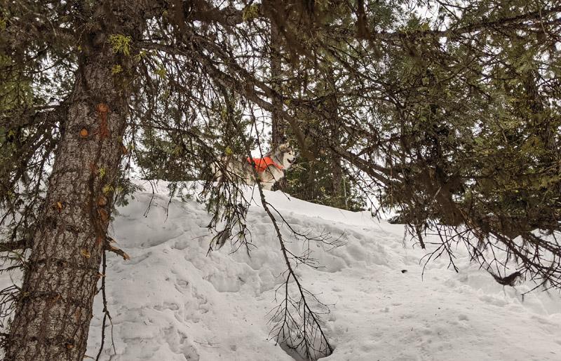 tree, dog, snow