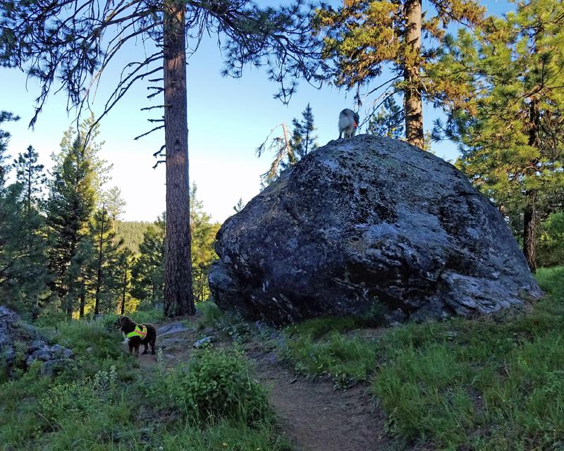 dogs, trees, dog on large boulder