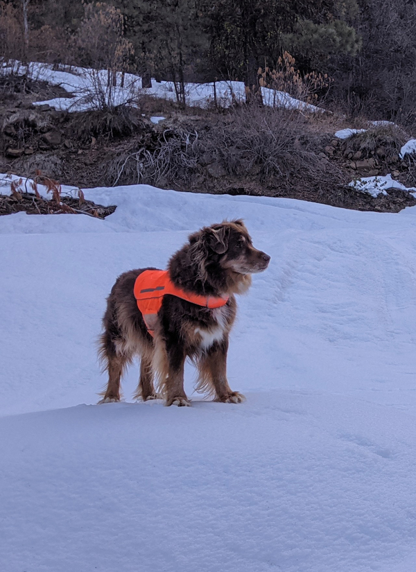 dog standing on snow in forest