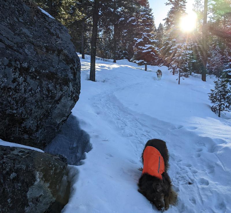 dogs, snow, trees, sun
