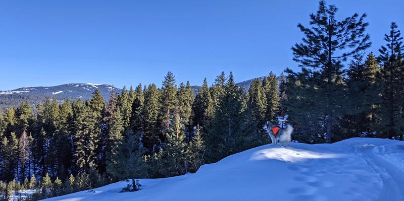 dog, snow, trees