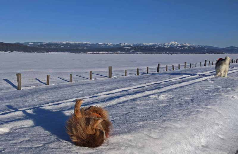 dogs on snow, fence, mountains