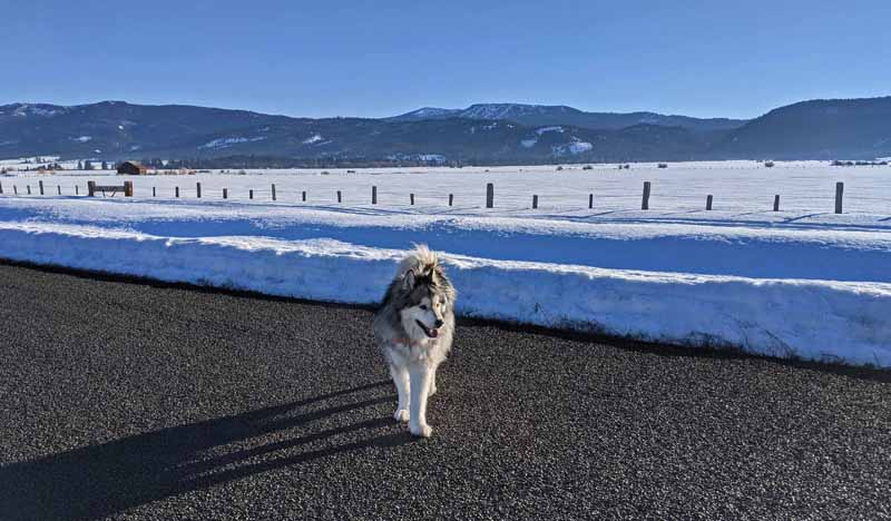 dog on road, snow, mountains