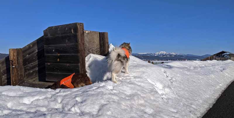 dogs, cattle chute, snow, barn, mountains