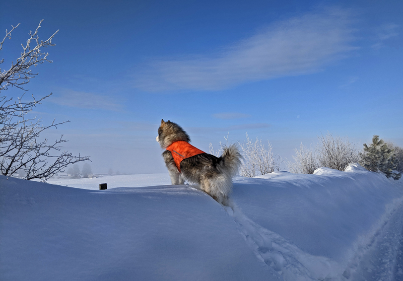 dog atop snow berm