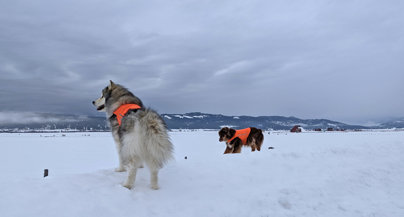 dogs, snow, clouds