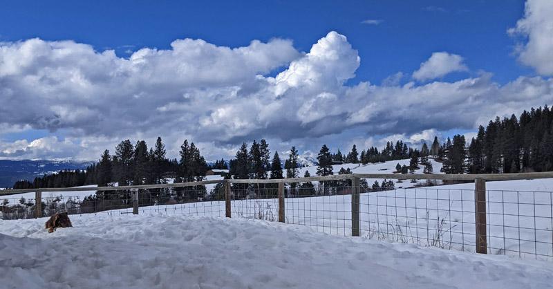 dog in snowy yard, clouds, sky