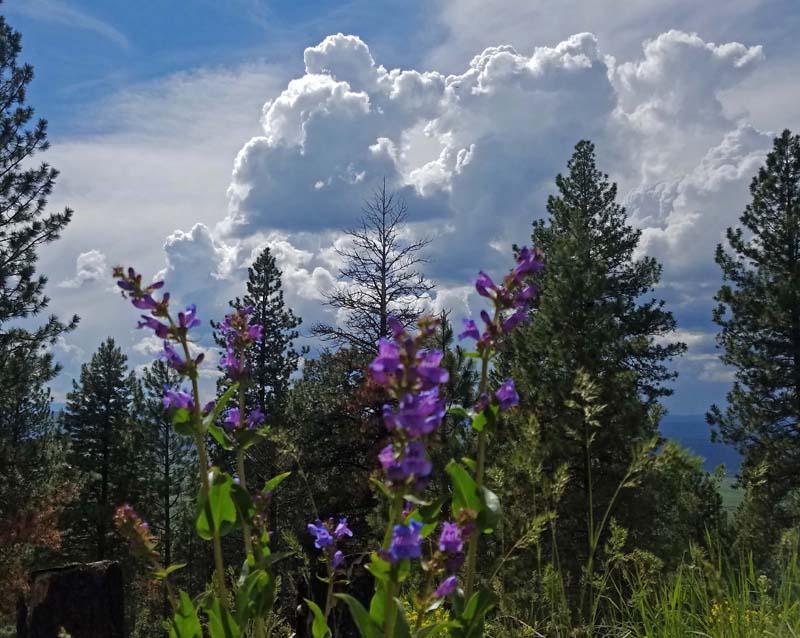 thunderheads, trees, wildflowers
