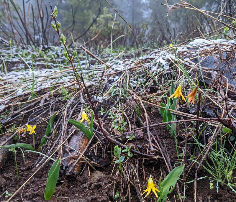wildflowers and snow
