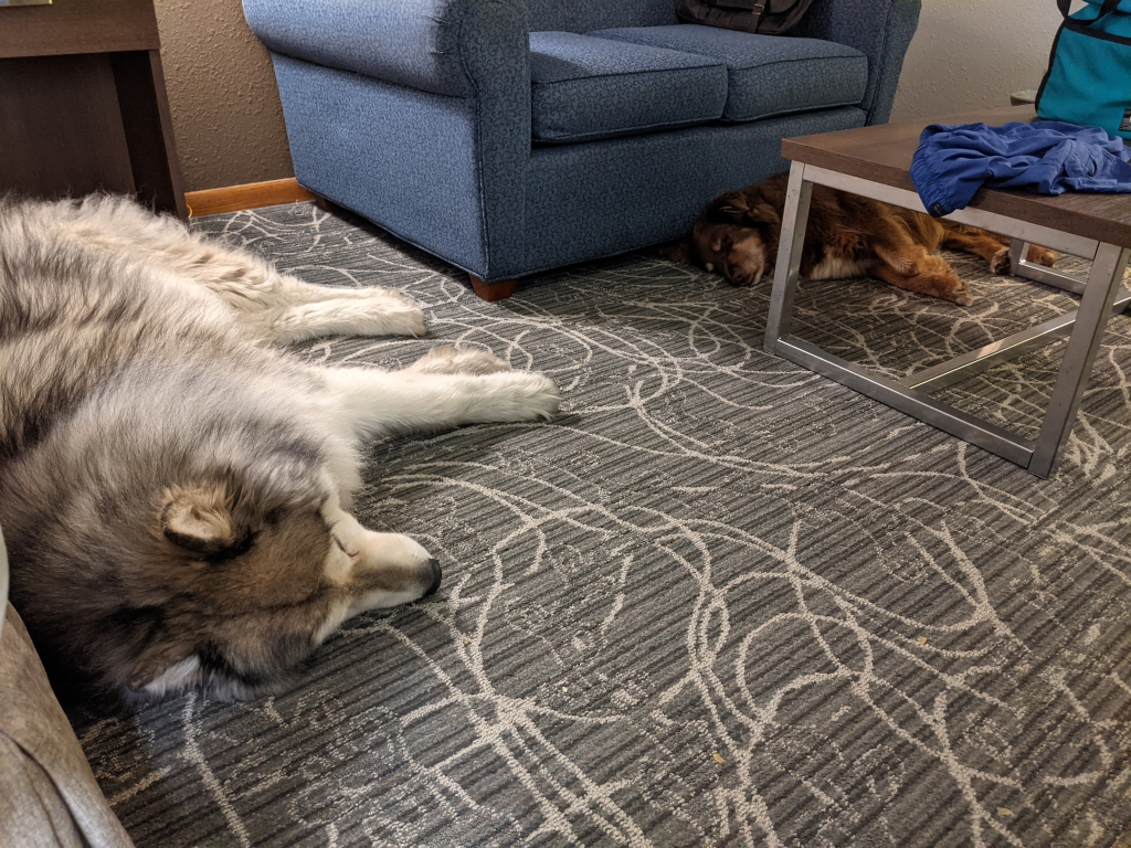 Dogs sleeping in hotel room.