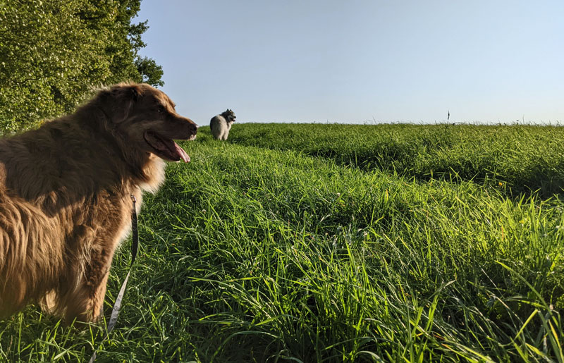 Finn and Conall in field