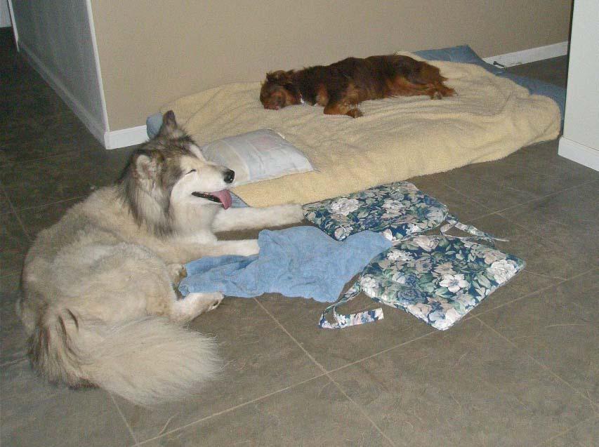 Meadow on floor, Finn on futon