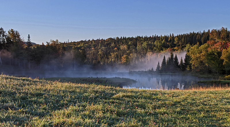 mist on pond, geese in grass, fall color in trees
