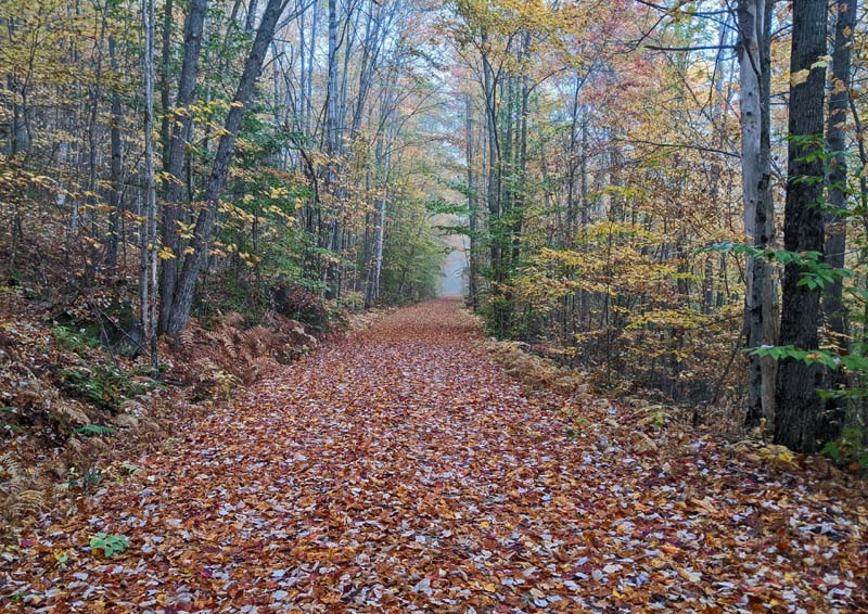 rail trail completely covered in leaves