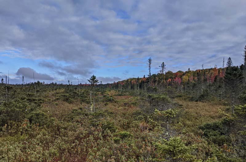Peacham Bog from trail viewing platform